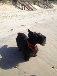 Bo at Beach